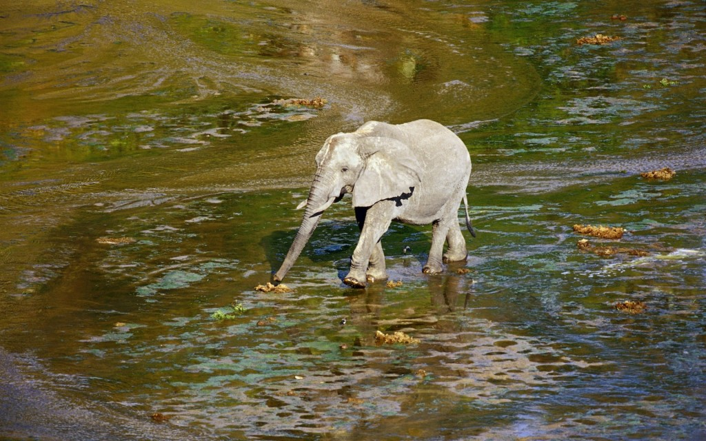 1920x1200_slonik-slon-malyish-zoopark-voda-iskusstvennoe
